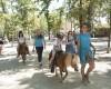 Camping Orlando in Chianti foto 7