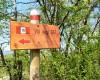 Camping Mugello Verde foto 22