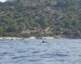 Tour Della Corsica 2021   foto 1