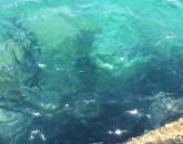 Sardegna Ovest, Selvaggia, E Cagliari  foto 8