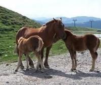 Francia2010-Verdon e su e giù dai Pirenei