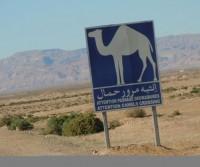 Un'altra volta in Tunisia