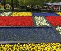 Paesi Bassi in primavera