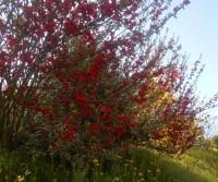 Liguria: Parco del Beigua