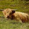Magica Scozia  foto 1