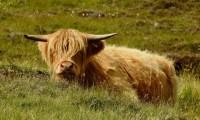 Magica Scozia