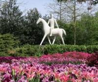 Olanda 2019: mulini e tulipani