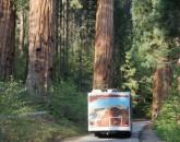 Viaggio In U.s.a. E Parchi Nazionali Del Sud-ovest  foto 1