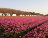 Olanda - Paesi Bassi, Pasqua 2019  foto 1