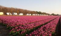 Olanda - Paesi Bassi, Pasqua 2019