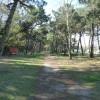 Area sosta camper Area Camper Casalborsetti, Pineta adiacente l'area, 03/04/18