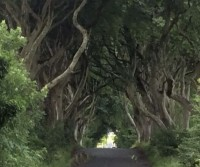 Dark Hedges parking