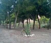 Camping La Pineta Village