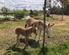 Agriturismo Campeggio F.lli Mizzon  01/05/19 11:33