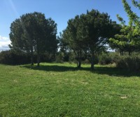 Borgo dei Pini