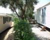 Camper Village  Bungalow tra gli ulivi per i nostri ospiti