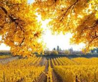 Viaggi d'autunno, in camper con Caravanbacci